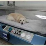 Dog in carbon monoxide chamber
